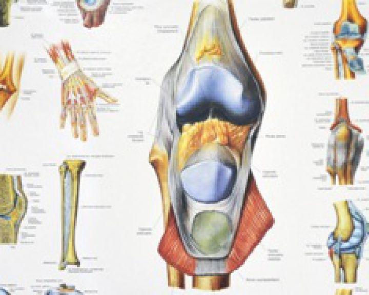 visi gerklės sąnarių gydymas artrozė 2 laipsnis
