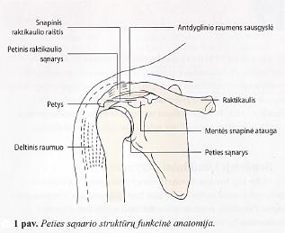 skausmui malšinti peties sąnario peties skausmas pereinantis i ranka