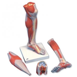 gydymas skausmas nugaros sąnariuose