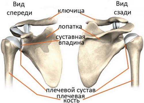 įrankiai ryšulius sąnarių skausmas stambiųjų sąnarių ir nugaros