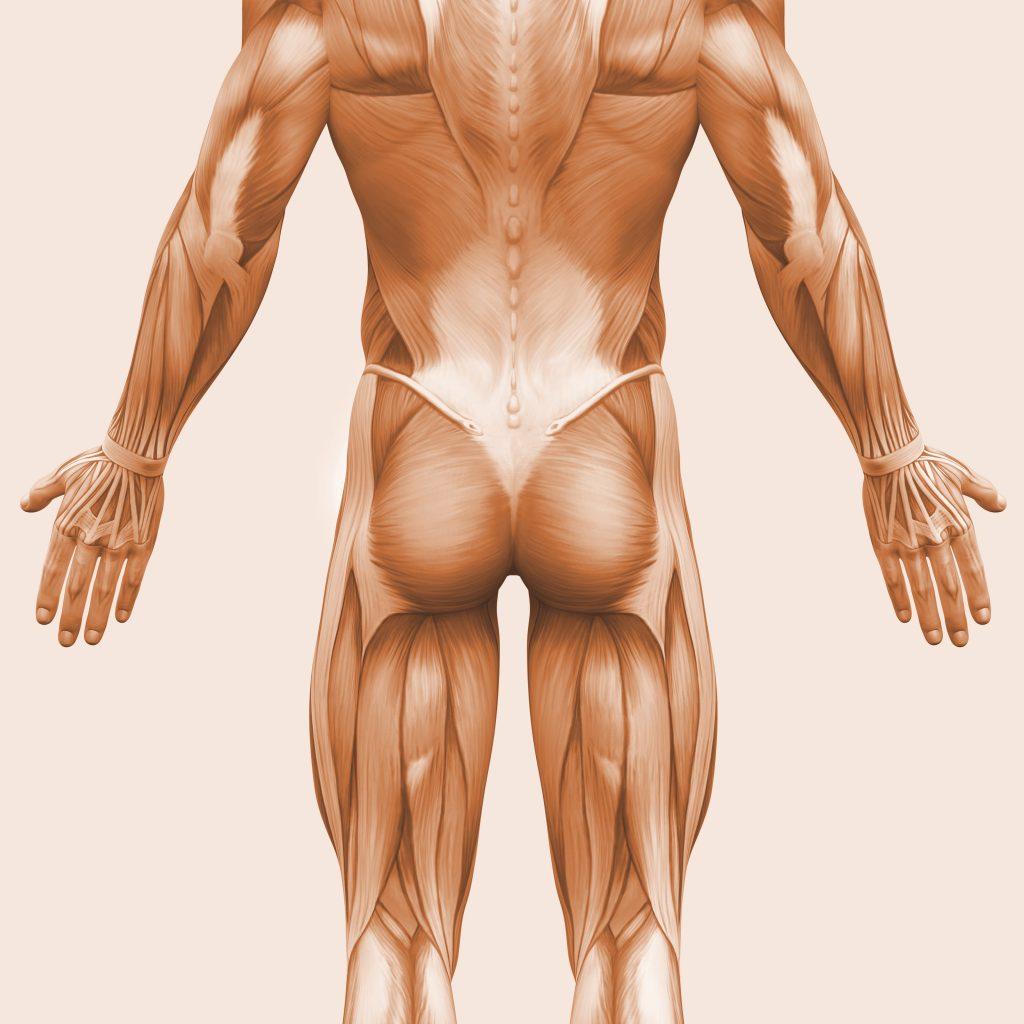 bold sąnarių ir raumenų sėdmenų ilgalaikis skausmas