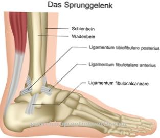 apžvalgos uht gydant osteoartritą