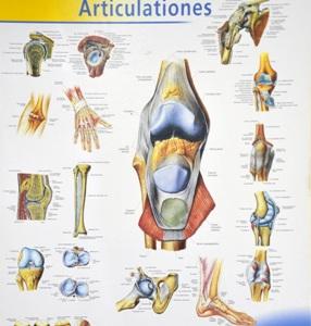 ką daryti su artrozės peties sąnario gydymas skausmas iš liaudies gynimo ranka sąnarių