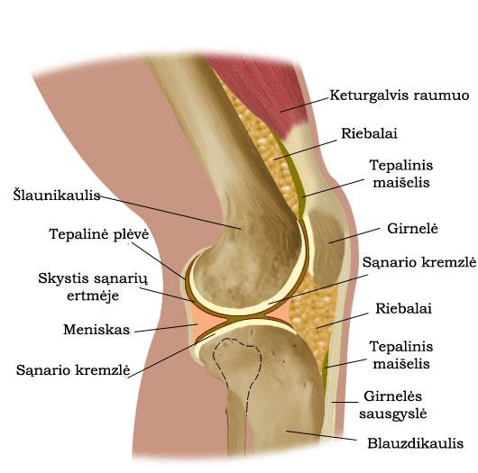 pagrindiniai skausmas priežastys kas geliai yra geriau osteochondrozės