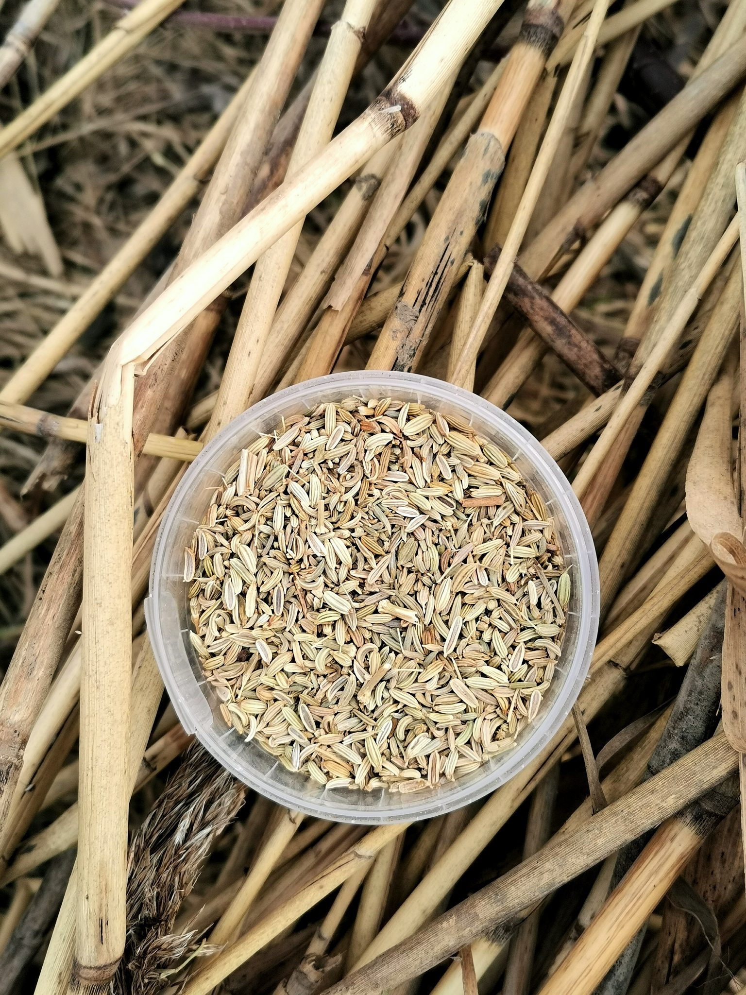pankolio sėklos apdorotos sąnarių