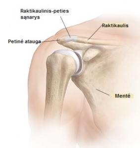 skausmas sąnaryje ir raumenų peties priežastys ir gydymas skausmas peties ir alkūnės sąnarių gydymas